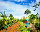 Agrofloresta: técnica é mais respeitosa com meio ambiente e, ao mesmo tempo, muito produtiva, trazendo maiores expectativas de futuro para os agricultores