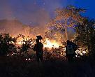 Brigada de Alter do Ch?o, no Pará, combate queimada na regi?o