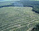 Desmatamento volta com for?a à Amaz?nia, na expectativa de anistia com reforma do Código Florestal