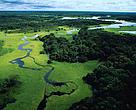 Vista aérea da floresta alagada durante a esta??o chuvosa, Reserva Florestal do Rio Negro, Amazonas.
