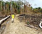 Estudos apontam que, com as mudan?as no Código Florestal, o desmatamento aumentaria no país.