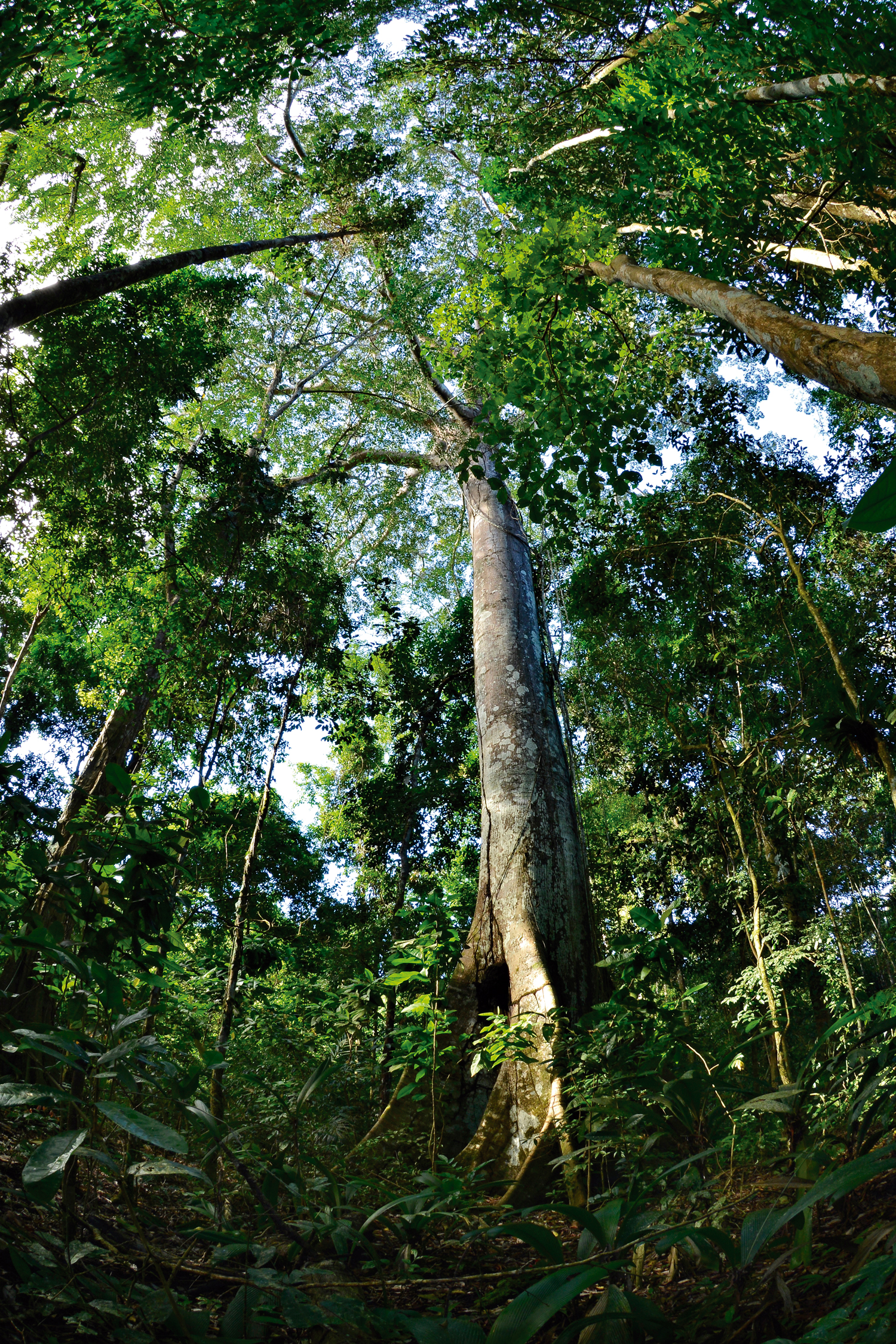 Amazônia: Área protegida apoiada pelo Arpa (Áreas Protegidas da Amazônia), no Parque Nacional do Juruena – Amazonas