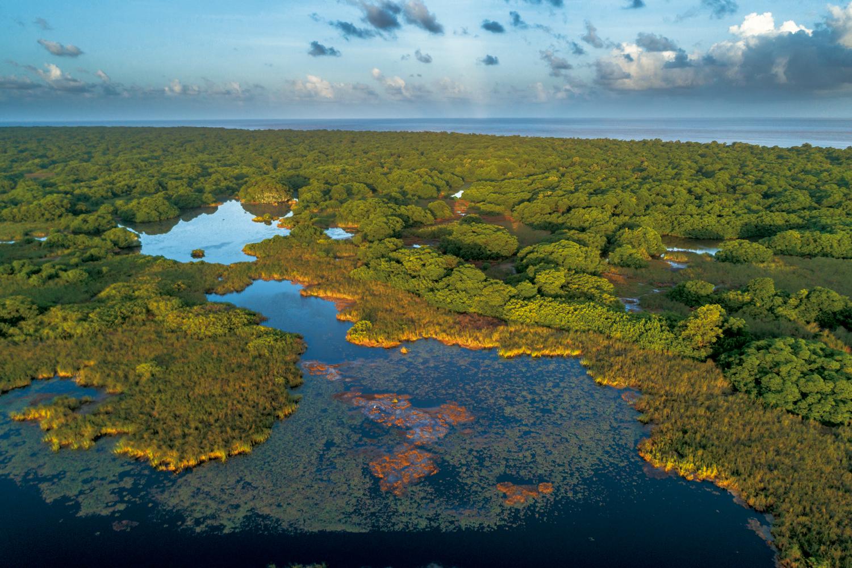 Amazônia: Vista de drone das lagoas de água salgada no sul da Ilha de Maracá, Estação Ecológica Maracá-Jipioca – Amapá
