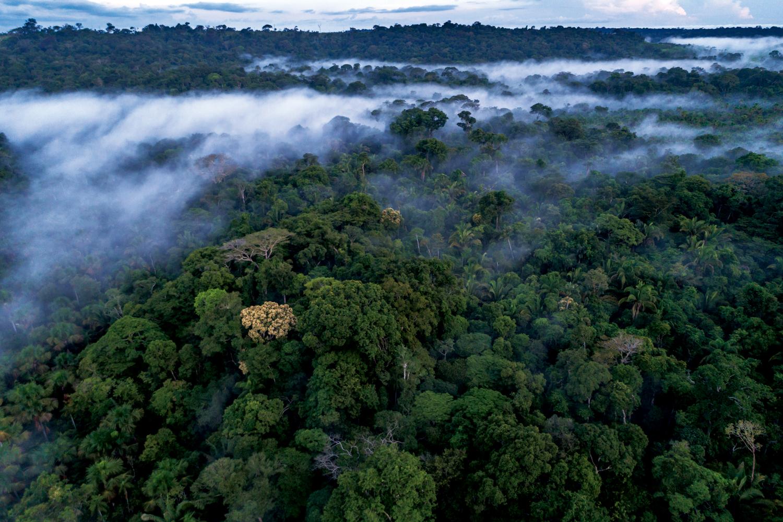 Amazônia: Vista aérea da Floresta Amazônica, Assentamento Juma, Apuí – Amazonas