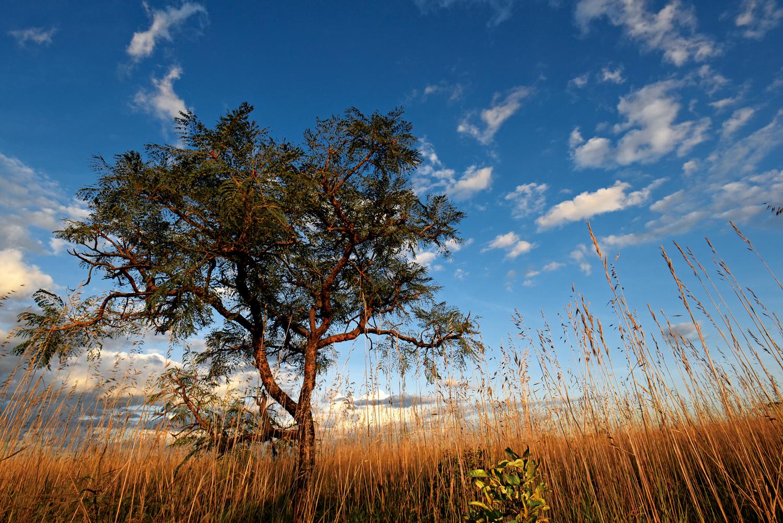 Cerrado: Paisagem de Campos de Cerrado, Parque Nacional das Emas – Goiás