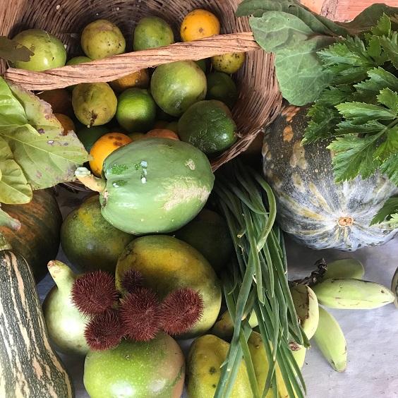 Alimentos orgânicos produzidos em assentamentos de Planaltina, DF