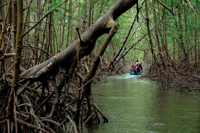 Mata Atlântica: Manguezal na Reserva Extrativista Marinha do Cassurubá, na Bahia