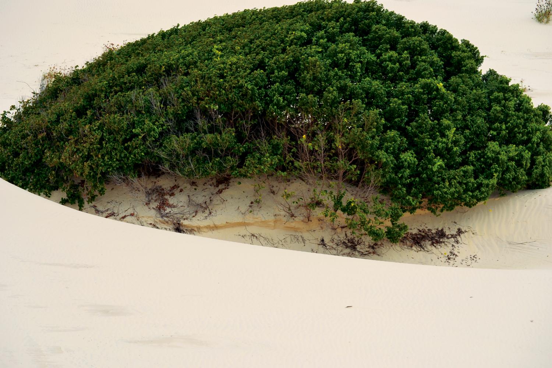 Mata Atlântica: Dunas da praia do saco, em Estância – Sergipe