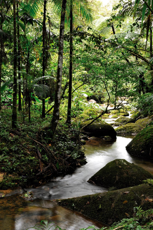 Mata Atlântica: Trilha da Figueira, no Parque Estadual Carlos Botelho, em Sete Barras - São Paulo