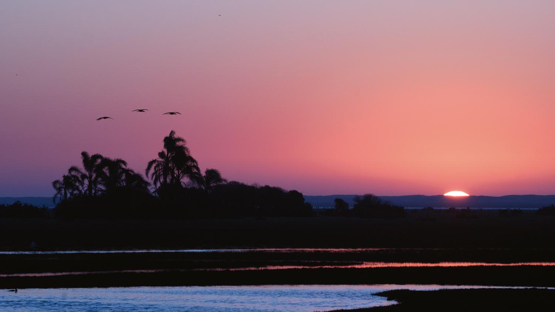 Pampas: Parque Nacional da Lagoa do Peixe, em Tavares - Rio Grande do Sul