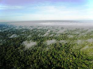 Vista aére de trecho de floresta amazônica no estado do Acre